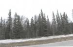 Near Milepost 23 Kenai Spur Highway , Nikiski, Alaska<br />United States