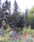 Moose Meadows Road Parcel B, Wasilla, Alaska<br />United States